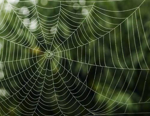 spiderwebjpg